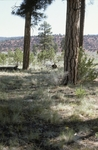 Zuni Mountains (7).JPG