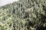 Butterfly Peak (2).JPG by USDA Forest Service