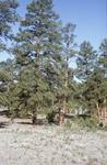 Zuni Mountains (6).JPG