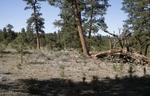 Zuni Mountains (4).JPG