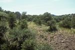 Canelo Hills   (6).jpg