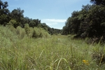Canelo Hills (4).jpg by USDA Forest Service