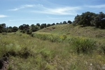 Canelo Hills (3).jpg by USDA Forest Service