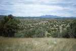 Canelo Hills (1).jpg by USDA Forest Service