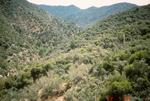 Buckhorn Mountain (8).jpg by USDA Forest Service