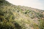 Buckhorn Mountain (7).jpg by USDA Forest Service
