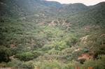 Buckhorn Mountain (5).jpg by USDA Forest Service