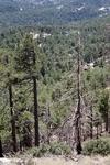 Butterfly Peak (1).JPG by USDA Forest Service