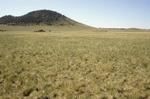 Garland Prairie (5).JPG
