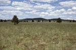 Garland Prairie (15).JPG