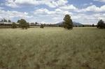 Garland Prairie (14).JPG