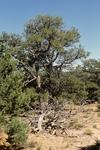 Comanche Canyon (7).JPG