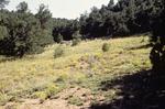 Comanche Canyon (4).JPG