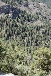 Butterfly Peak (7).JPG by USDA Forest Service