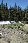 McCrystal Meadow (2).JPG