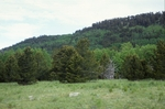 Clayton Pass (1).JPG by USDA Forest Service