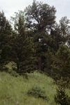 Clayton Pass (3).JPG by USDA Forest Service