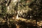 Turkey Creek Photos (4)